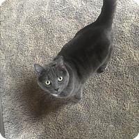 Adopt A Pet :: Joyce - North Haven, CT