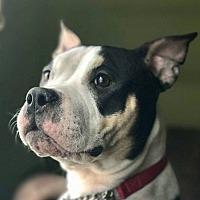 Adopt A Pet :: VIOLET - Ridgewood, NJ