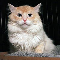 Adopt A Pet :: Dublin - Overland Park, KS