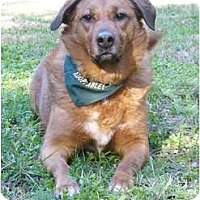 Adopt A Pet :: Angie - Mocksville, NC