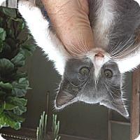 Adopt A Pet :: Aidin - Santa Monica, CA