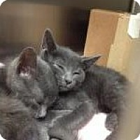 Adopt A Pet :: Carl and Ritchie - East Hanover, NJ