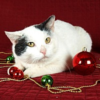 Adopt A Pet :: Nypsey - Jackson, MS