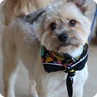 Adopt A Pet :: Fluffy - Lebanon, CT