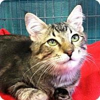 Adopt A Pet :: Meyer - Seminole, FL