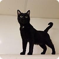 Adopt A Pet :: C-18 - Indianola, IA
