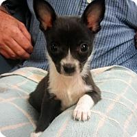 Adopt A Pet :: Jasmine - oakland park, FL
