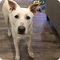 Adopt A Pet :: Cinder - eagle point, OR