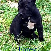 Adopt A Pet :: Forest - Pensacola, FL