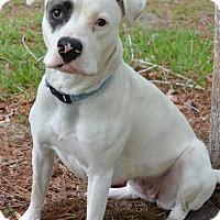 Adopt A Pet :: 10310709 TARGET - Brooksville, FL
