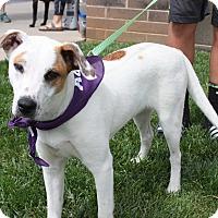 Adopt A Pet :: Lucky - Springfield, MO