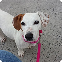 Adopt A Pet :: Peanut - Monroe, NC