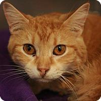 Adopt A Pet :: Cheerios - Canoga Park, CA