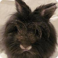 Adopt A Pet :: Kiera - Williston, FL
