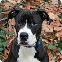 Adopt A Pet :: Mulder - Port Washington, NY
