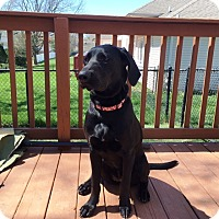 Adopt A Pet :: Abby - Columbus, IN