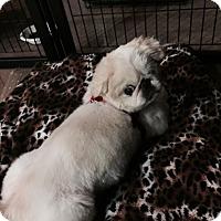 Adopt A Pet :: COSMO - SO CALIF, CA