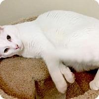 Adopt A Pet :: Zeke - Westlake Village, CA
