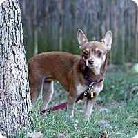 Adopt A Pet :: Jayla - Austin, TX