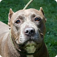 Adopt A Pet :: Riley - Chestertown, MD