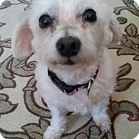 Adopt A Pet :: Bobbie - Toronto, ON