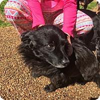 Adopt A Pet :: Emmett (ETAA) - Harrisonburg, VA