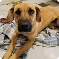 Adopt A Pet :: Priscilla - Avon, NY