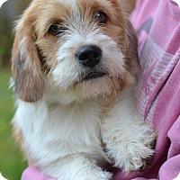 Adopt A Pet :: Ziggy - Enfield, CT