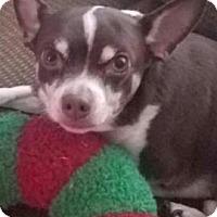 Adopt A Pet :: Moe - Centerville, GA