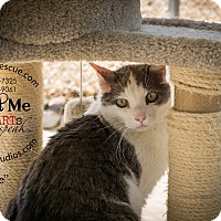 Adopt A Pet :: Vick - Gardnerville, NV