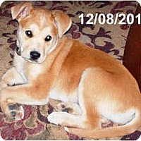 Adopt A Pet :: SAMSON - Plainfield, CT
