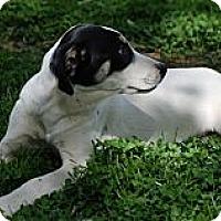 Adopt A Pet :: Aimee - Providence, RI