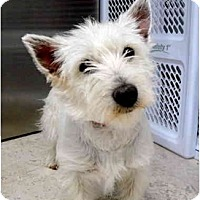 Adopt A Pet :: Scooter - Albuquerque, NM