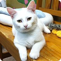 Adopt A Pet :: Smudge - Byron Center, MI