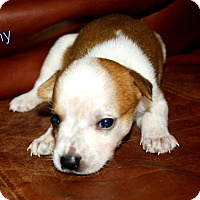 Adopt A Pet :: Tiny - Austin, TX