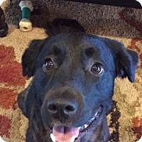 Adopt A Pet :: Elsa - Humble, TX