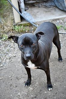 Terrier (Unknown Type, Medium) Mix Dog for adoption in Ringoes, New Jersey - Piggy