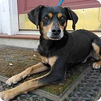 Adopt A Pet :: Momo - West Springfield, MA