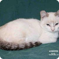 Adopt A Pet :: *HERMAN - Hanford, CA