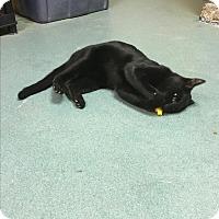 Adopt A Pet :: Bagheera - Richboro, PA