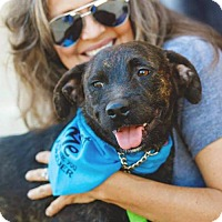 Adopt A Pet :: Biko - Cedar Creek, TX