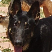Adopt A Pet :: Ryon - Dripping Springs, TX