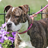 Adopt A Pet :: Sabrina (Spayed)-New Photos - Marietta, OH