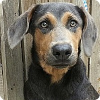 Adopt A Pet :: Bootsie(ADOPTED!) - Chicago, IL