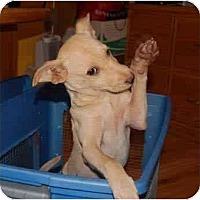Adopt A Pet :: Baily - Chula Vista, CA