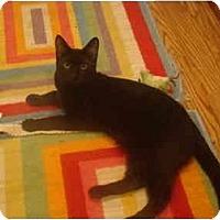 Adopt A Pet :: Cole - Muncie, IN