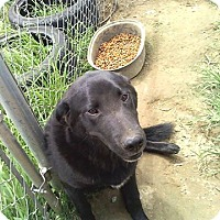 Adopt A Pet :: Gracie - Stamford, CT