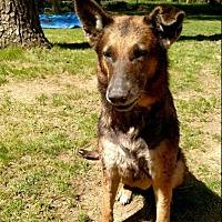 Adopt A Pet :: Luna2 - Morrisville, NC