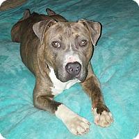 Adopt A Pet :: Maximus - Homewood, AL