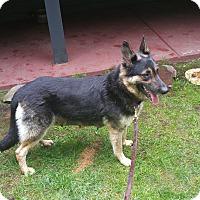 Adopt A Pet :: Cleo - Mill Creek, WA